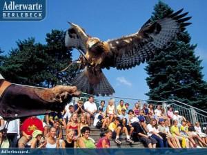 Die Adlerwarte Berlebeck lädt zum Entdecken vieler Vogelarten ein.