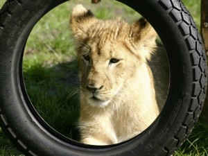 Im Safaripark Stukenbrock erleben Sie Tiere hautnah!
